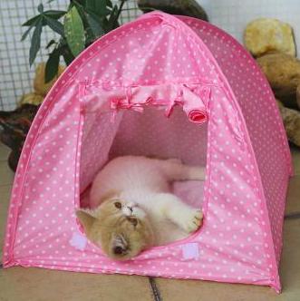 Tenda Hewan Peliharaan: Hadiah Serbaguna dan Praktis untuk Pecinta Kucing