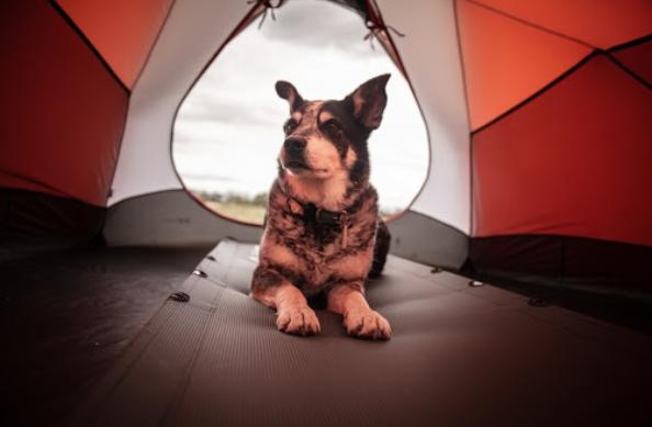 Tenda Hewan Peliharaan – Apa Manfaatnya bagi Hewan Peliharaan Anda?